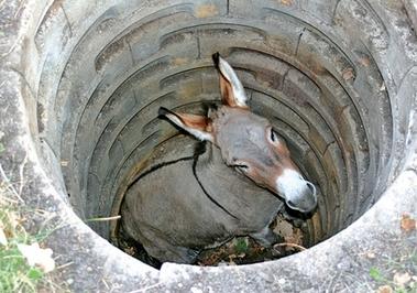 donkey12.jpeg