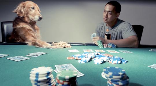 dog-stock-poker